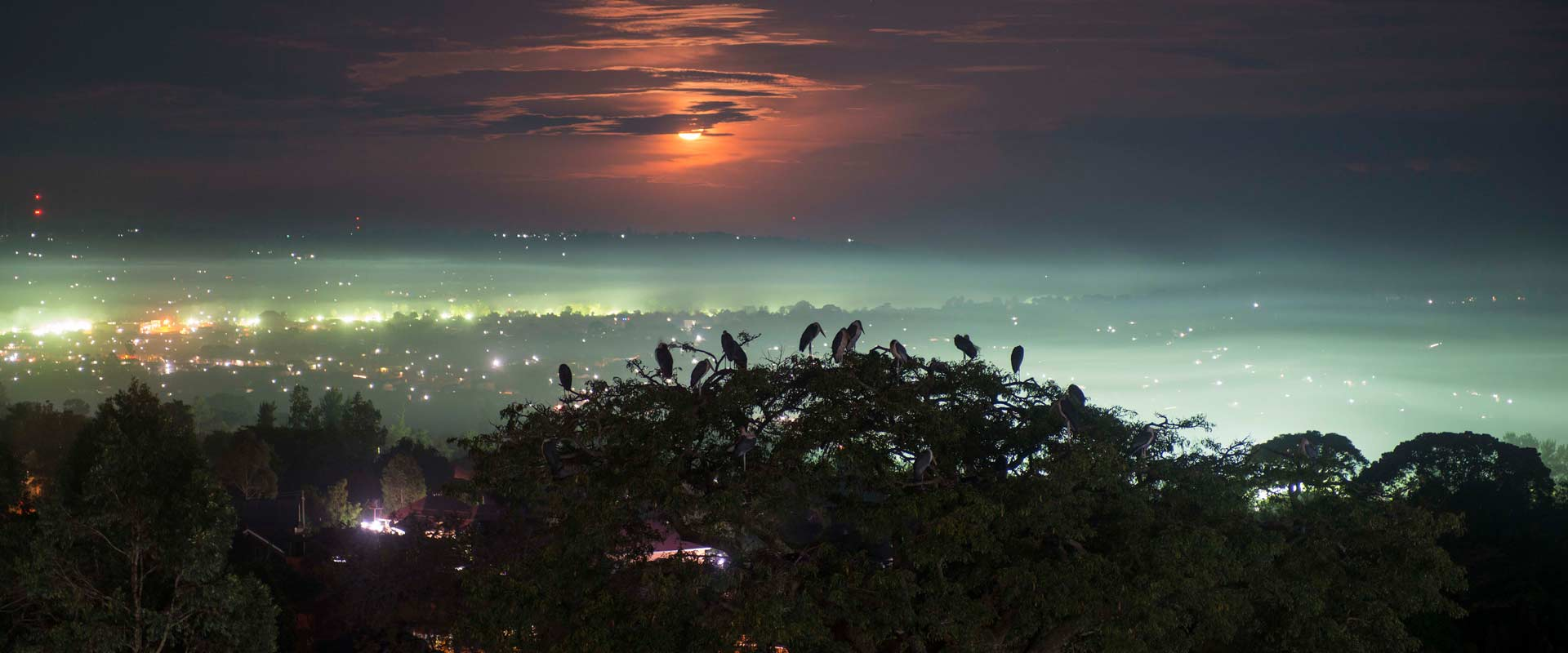 Birds settling in three tops in Masaka at sunset