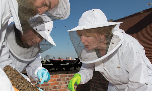 University beekeepers maintaining one of two urban beehives on top of the Rutherford building on campus