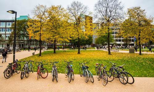 Bikes lined up under autumnal trees