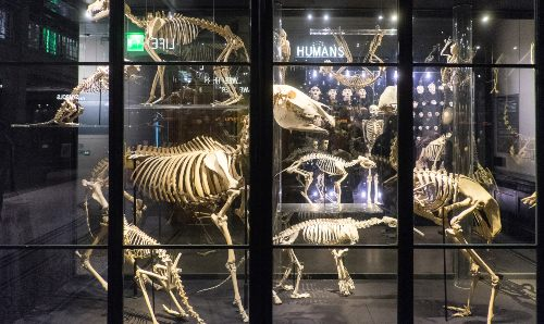 Exhibition of animals skeletons