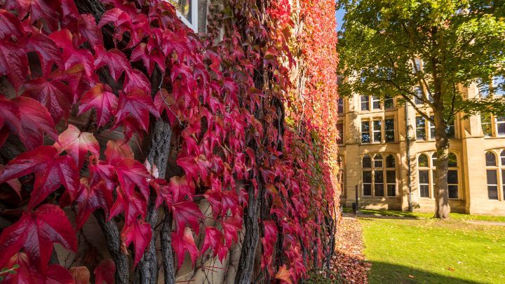 A wall of the John Owens building covered in leaves